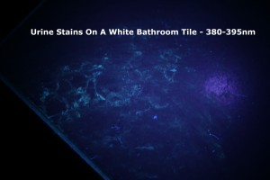 Dried Urine On White Bathroom Tiles Under PeeDar 2.0's 380-385nm